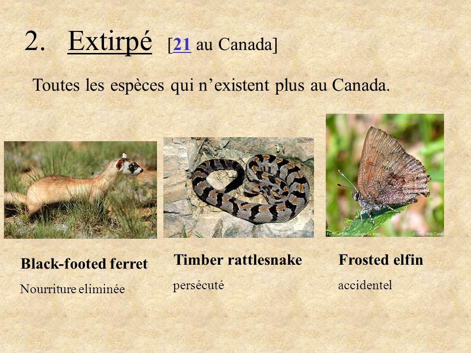 2. Extirpé [21 au Canada] Toutes les espèces qui n'existent plus au Canada. Frosted elfin. accidentel.
